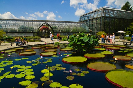 longwood-gardens-lily-pond-587